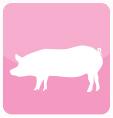 Para Cerdo
